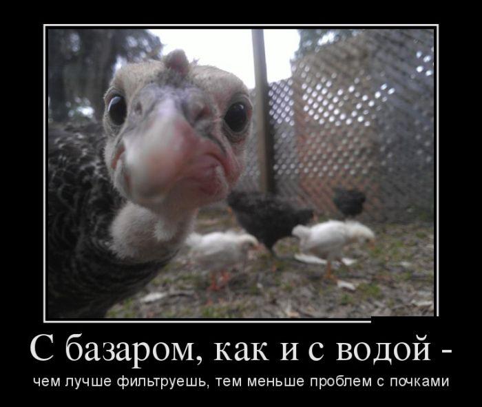 http://trinixy.ru/pics5/20170119/demotivatory_23.jpg