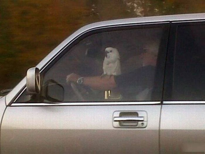 Автомобильный юмор (52 фото)