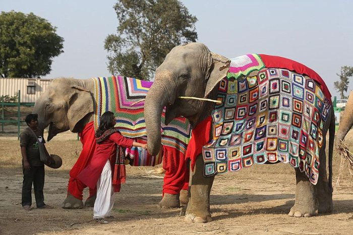 Индийских слонов спасают от холодов теплыми костюмами (6 фото)