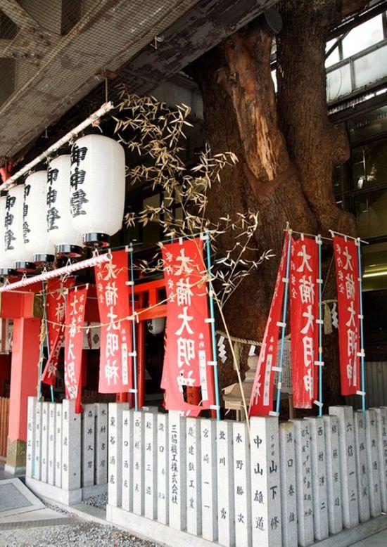 700-летнее дерево посреди железнодорожной станции в Осаке (7 фото)