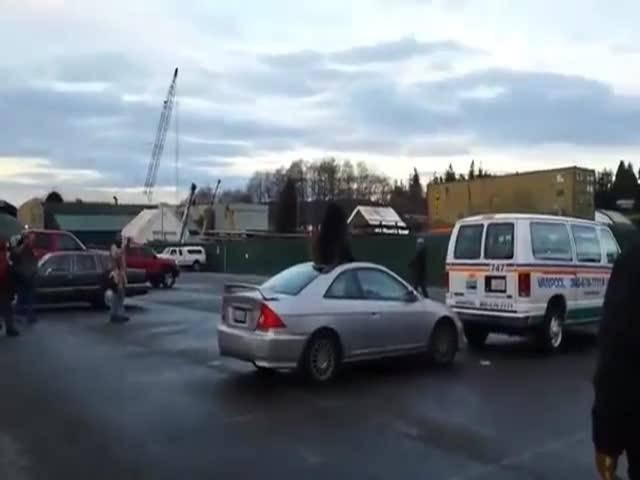 Морской лев на крыше автомобиля
