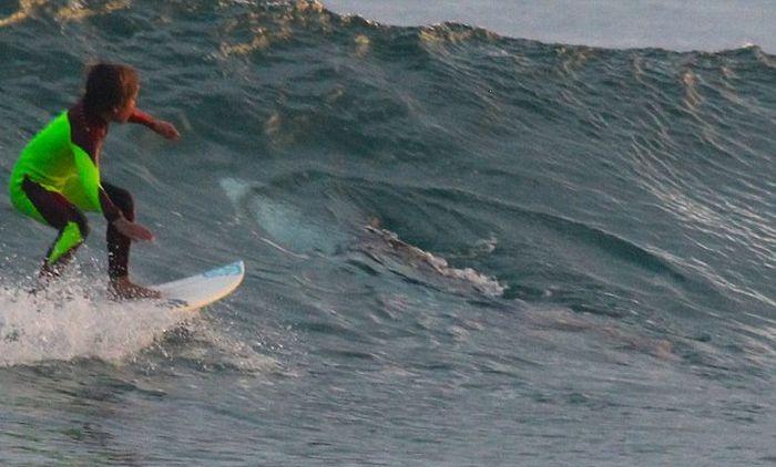 10-летний серфер случайно проплыл над белой акулой (4 фото)
