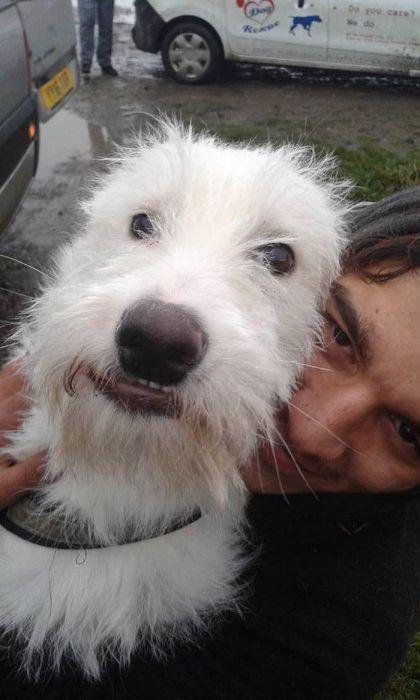 Спасение щенка (11 фото)