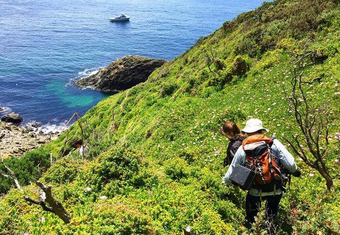 На отдаленный остров в Тасмании требуются смотрители, которые проведут там полгода без интернета (4 фото)