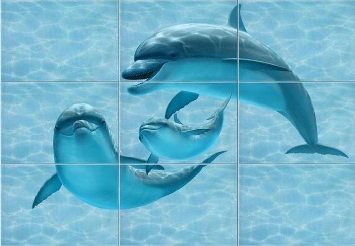 Когда никогда не видел дельфинов (2 фото)