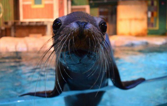 Зоопарки и океанариумы делятся снимками своих питомцев (27 фото)