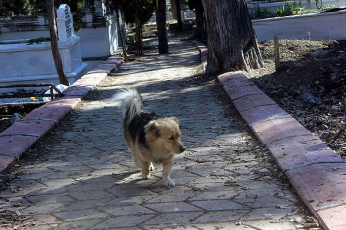 Преданный пес (8 фото)