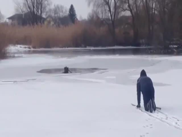 Парень спас собаку