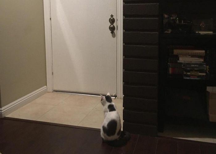 Кот терпеливо ждет своего хозяина (2 фото)