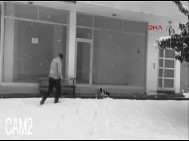 Парень помог замерзающей собаке