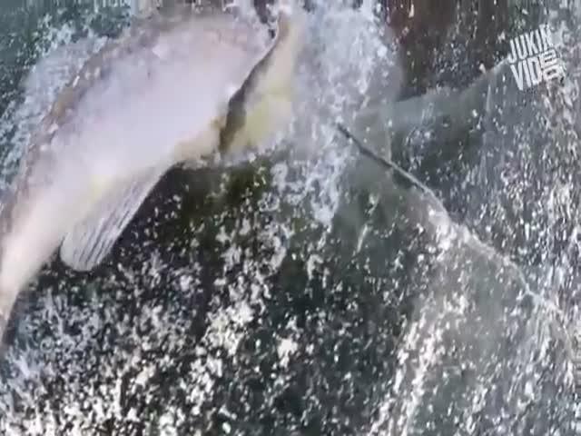 Охотник и жертва оказались вмороженными в лед