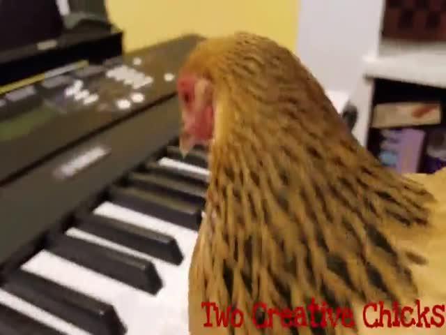 Песня America the Beautiful в исполнении курицы
