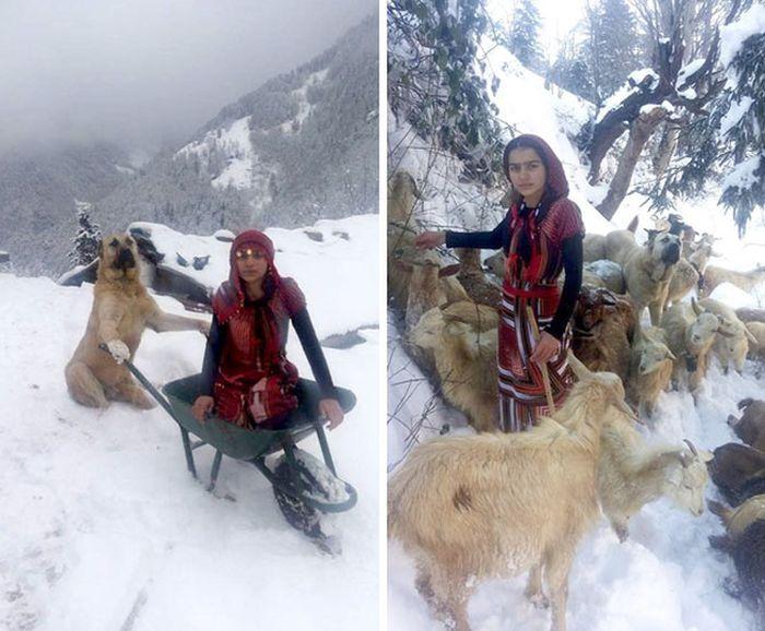 Девочка и ее собака спасли козу с новорожденным козленком (6 фото)