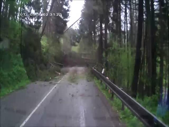 Массовый завал деревьев на лесной дороге
