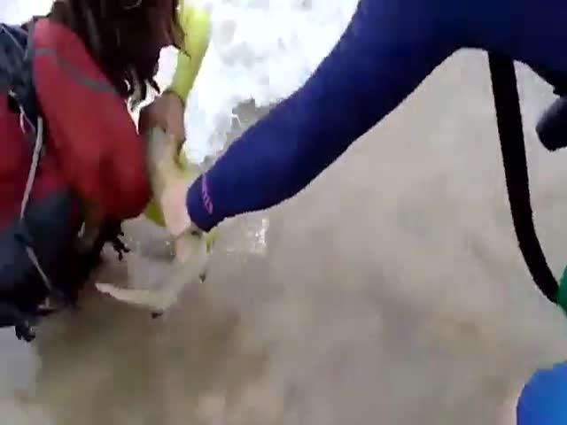 Акула не стала отпускать свою добычу