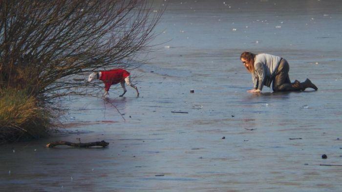 Спасение провалившейся под лед собаки (8 фото)