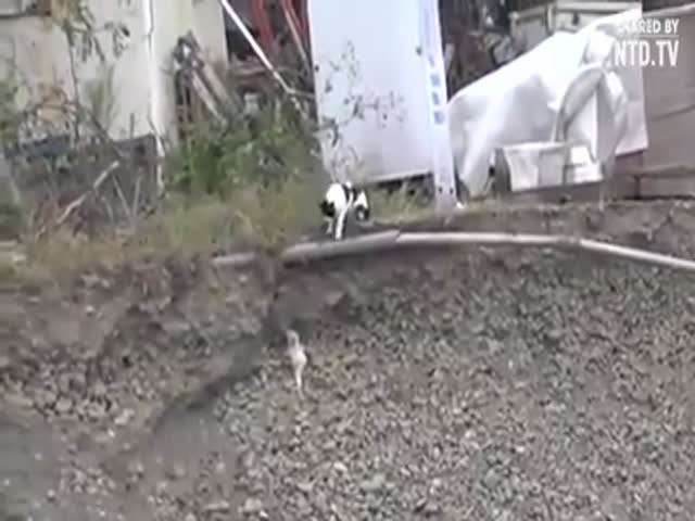 Кошка спасает щенка