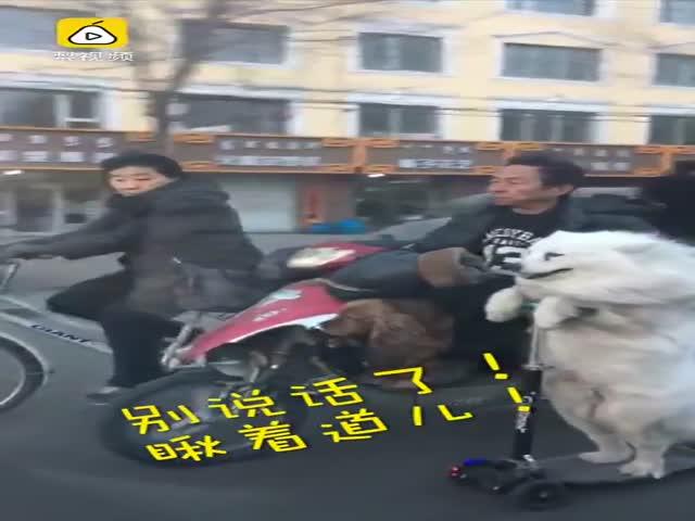 Собака на электросамокате катается по дорогам Китая