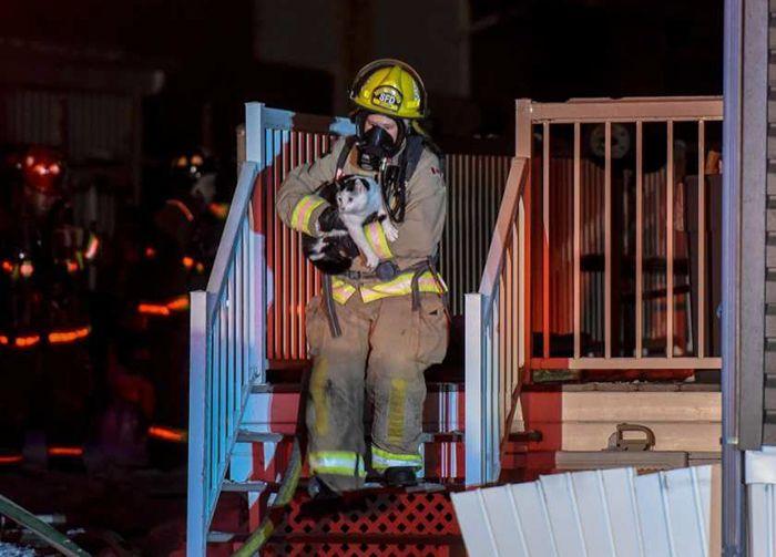 Кошка предупредила семью о пожаре (3 фото)