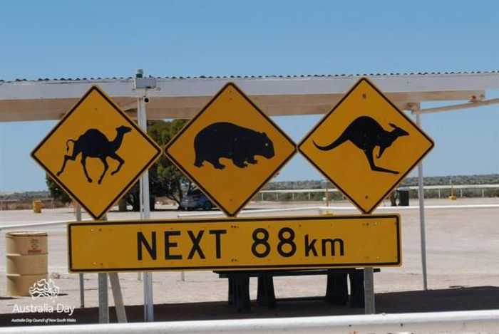 Только в Австралии (30 фото)