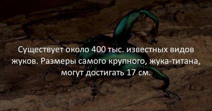 Интересные факты (40 картинок)
