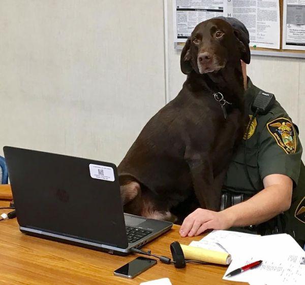 Минутная слабость служебной собаки (5 фото)