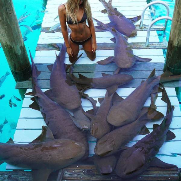Фотосессия с акулами на Бали (10 фото)