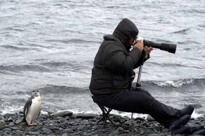 Фотографом быть нелегко (52 фото)