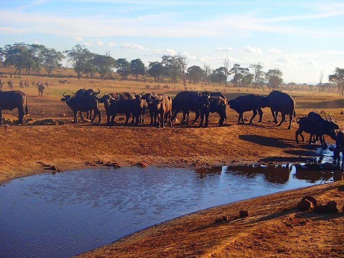Кенийский фермер спасает животных от жажды (9 фото)
