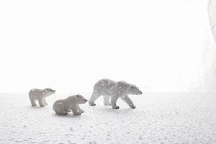 Фотограф делает прекрасные снимки живой природы, не выходя из дома (8 фото)