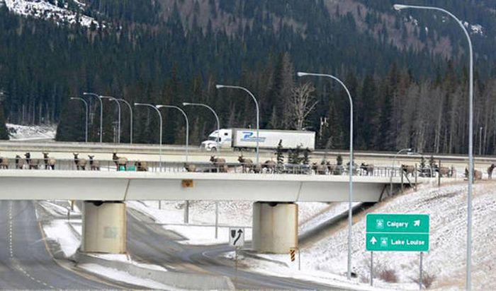 Мосты для животных (40 фото)