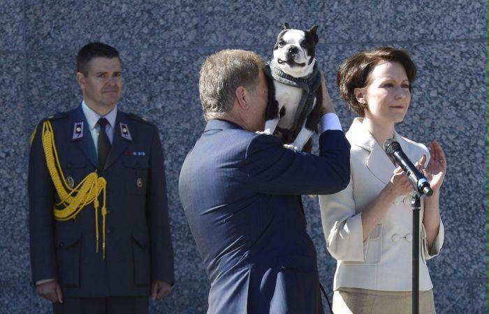 «Улыбчивая» собака президента Финляндии покоряет интернет (5 фото)