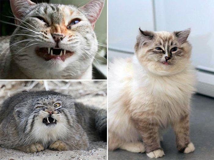Чихающие коты (16 фото)