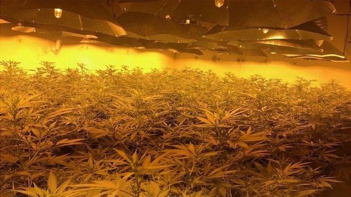 В Великобритании обнаружили плантацию марихуаны в ядерном бункере (3 фото)