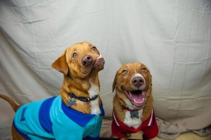 Собака c врожденным дефектом челюсти будет спасена (5 фото)