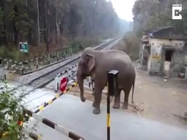 Слон преодолевает железнодорожный переезд