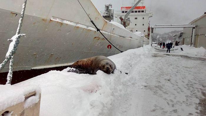 На Камчатке моряки подкормили голодного тюленя (3 фото + видео)