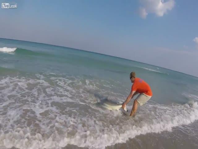 Спасение акулы во Флориде