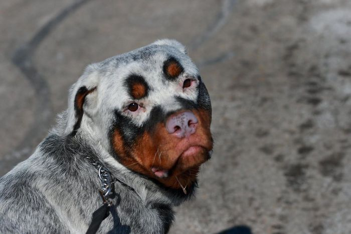 Животные с необычным окрасом (15 фото)