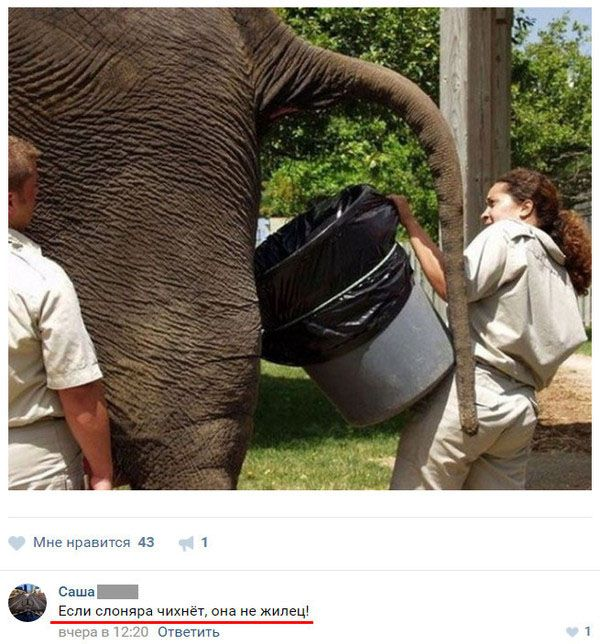 Самое смешное из соцсетей (19 скриншотов)
