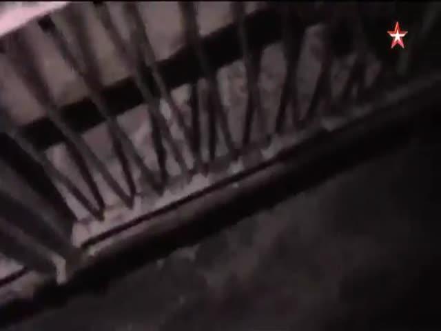 Грузовик, перевозивший тигров, попал в аварию