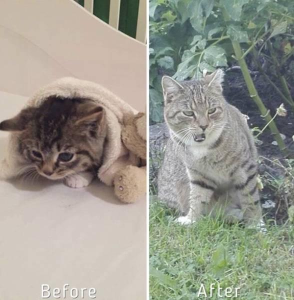 Девушка спасает бездомных кошек и находит им хозяев (15 фото)