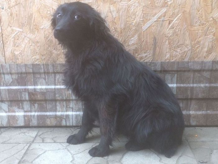 На Кубани спасли собаку, которая провела две недели на необитаемом острове (4 фото + видео)
