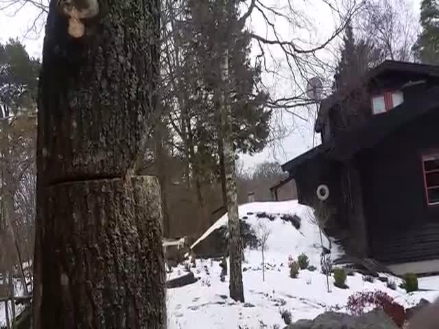 Как правильно пилить дерево