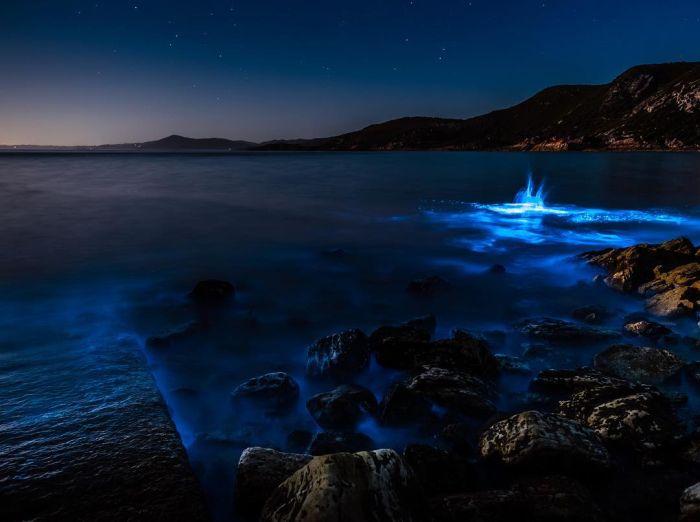 Биолюминесцентные морские водоросли у берегов Тасмании (7 фото)