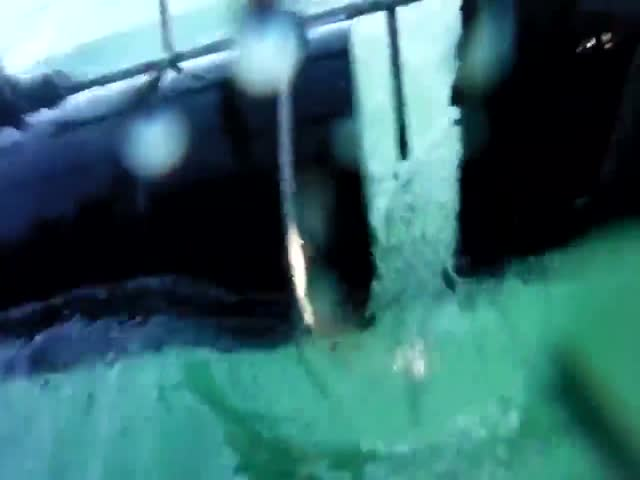 Белая акула атакует клетку с туристами