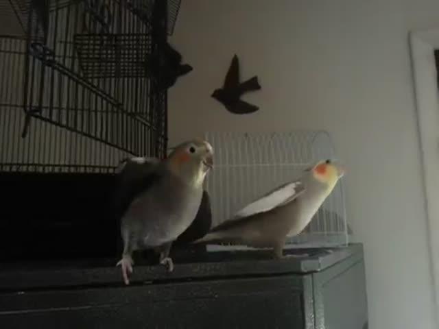 Довольный попугай