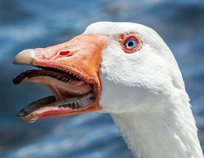 Самые странные рты на планете (18 фото)