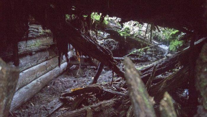 Отголоски войн, поглощенные природой (56 фото)