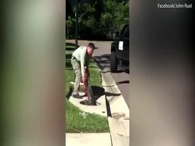 Спасение аллигатора, застрявшего в канализационном люке